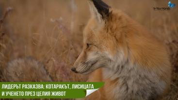 Лидерът разказва: Котаракът, лисицата и ученето през целия живот